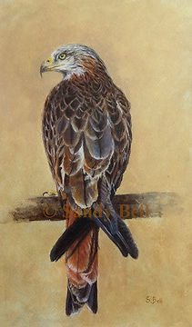 Red Kite small 6 marked.jpg