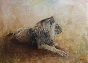 Lion Resting 7 small marked.jpg