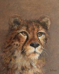 Cheetah 5 small marked .jpg