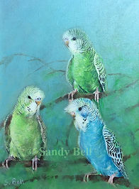 Budgies 44 small marked.jpg