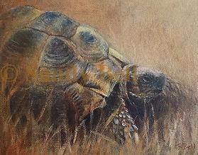 Tortoise 2 small 12 marked.jpg