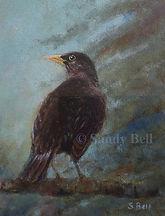 Blackbird 15 small marked.jpg