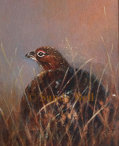 Red Grouse small 17 NFS marked.jpg