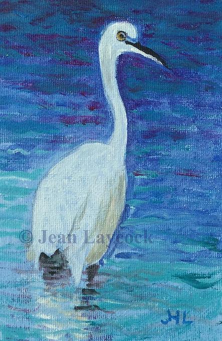 Laycock Egret .jpg