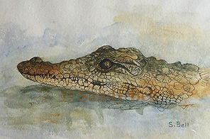 Croc 10 small marked.jpg