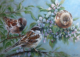 Sparrows with blossom 28 small marked.jp