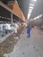Dierenwelzijn op de boerderij krijgt stilaan meer aandacht