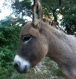 donkey02.jpeg