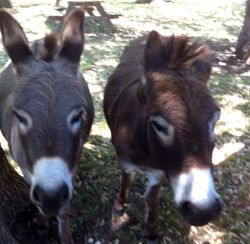 donkey03.jpeg