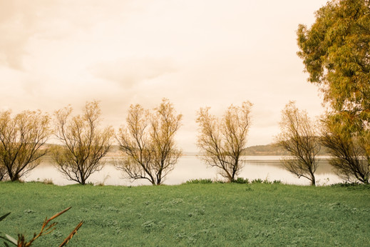 Trees At The Side Lake
