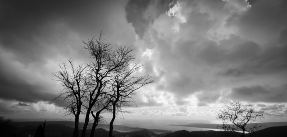 Winter Tree Against The Sky B&W
