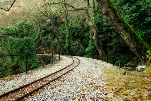 Rails In The Forrest
