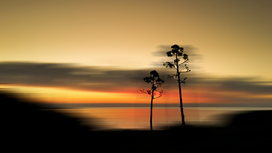 Trees Against sunset  In motion