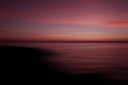 Birds In Purple Sunset