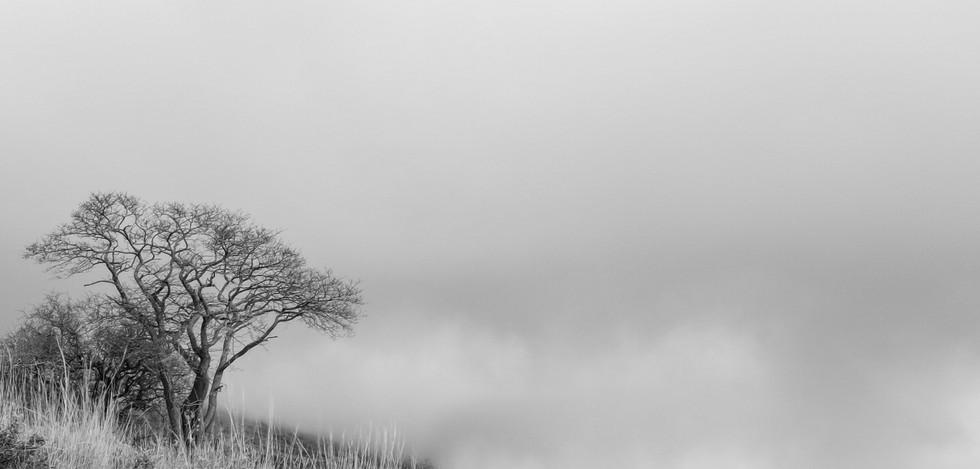 Tree On Mountain B&W