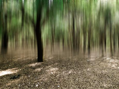 Forrest In Motion