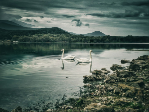 Swans In The Lagoon