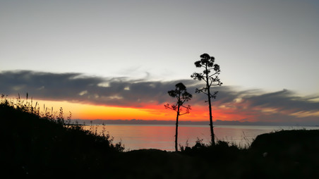 Trees Against The Sunset