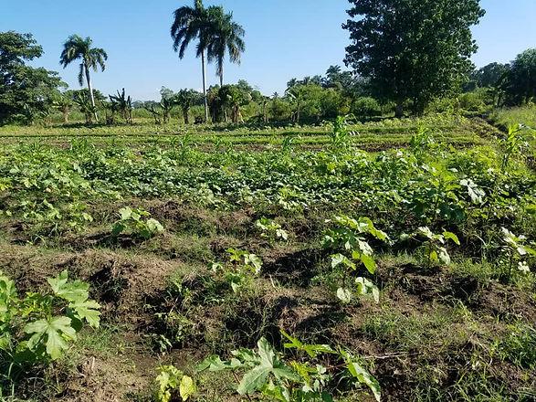Haitain farming.jpg
