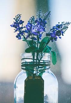 fleurs de bach.png