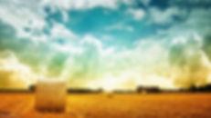sunny-field-401240.jpg