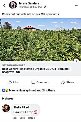 Pick your own hemp crop