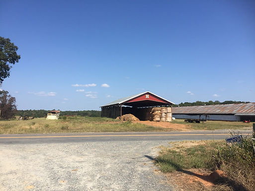 Shady Spot Organic Hemp Farm