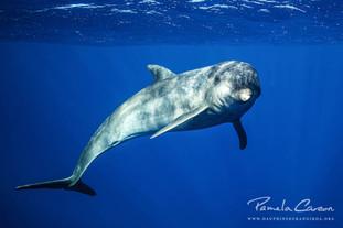 Volontariat dauphins en Polynésie