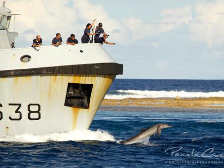 Les dauphins résidents accompagnent des navires dans la passe de Tiputa