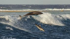 Juin : le petit dauphin né début avril baptisé par les élèves du collège