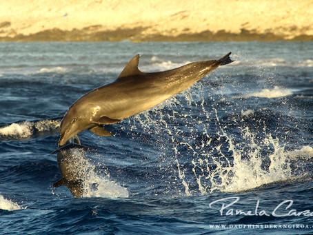 Premières nouvelles des dauphins pour 2021...