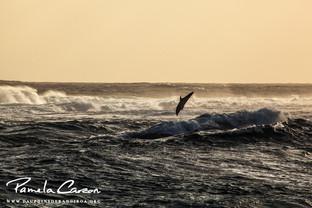 Rangiroa dolphin