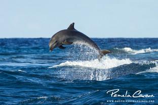 Volontariat dauphins