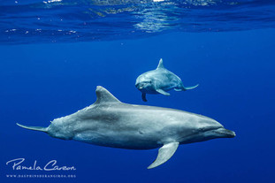 Swimming with dolphins in Rangiroa