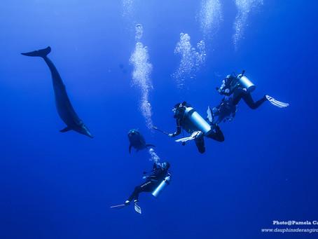 Science : des recommandations pour une observation durable des mammifères marins