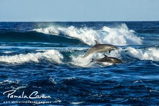 Nager avec des dauphins