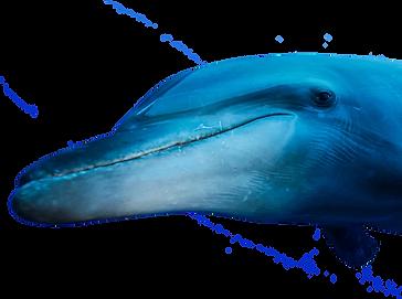 Nager avec un dauphin
