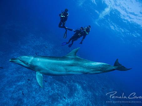 Participez à une enquête sur les interactions humains-dauphins !