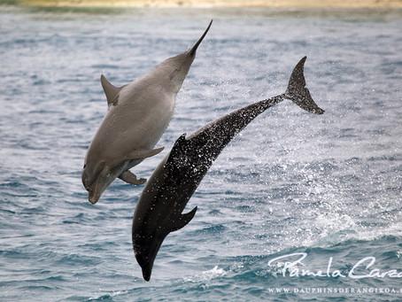 Un bébé dauphin pour janvier ou février 2021 ?