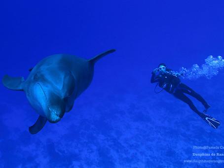La communauté de grands dauphins de Tiputa passée au crible