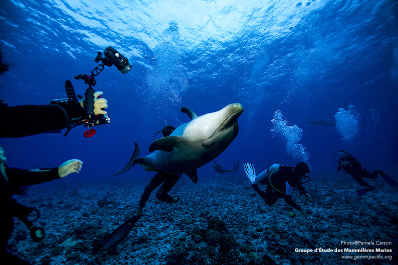 Spectacle de cirque sous-marin à Rangiroa.
