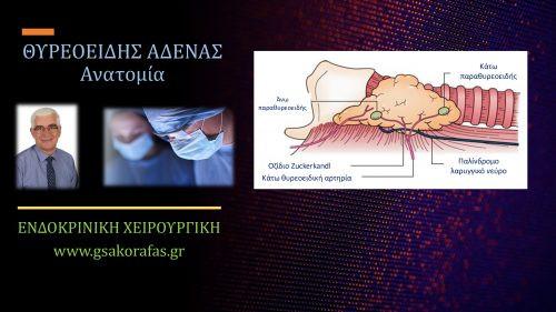Θυρεοειδής αδένας – Ανατομία: σημασία στην χειρουργική θυρεοειδούς