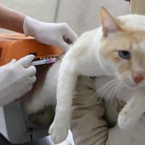 Cacoal confirma caso de raiva em morcego e anuncia vacinação para cães e gatos, em RO