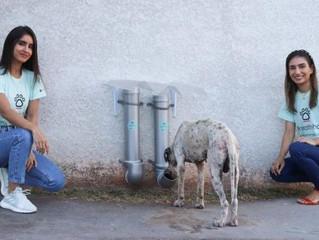 Amigas criam projeto para alimentar animais abandonados na Capital