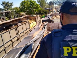 Ouro, drogas e madeira: PRF segue firme no combate ao crime em Rondônia