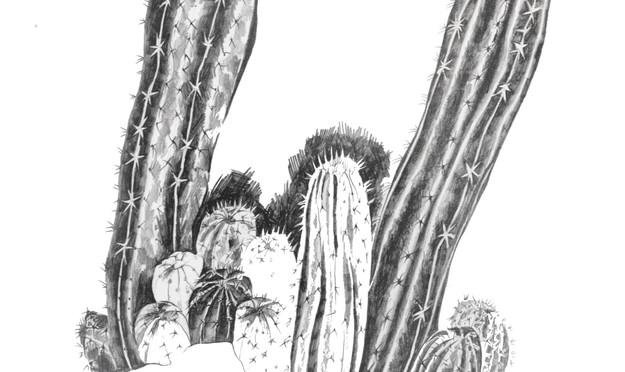 Spiky cactus mix