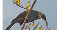 Tui on Flax Card