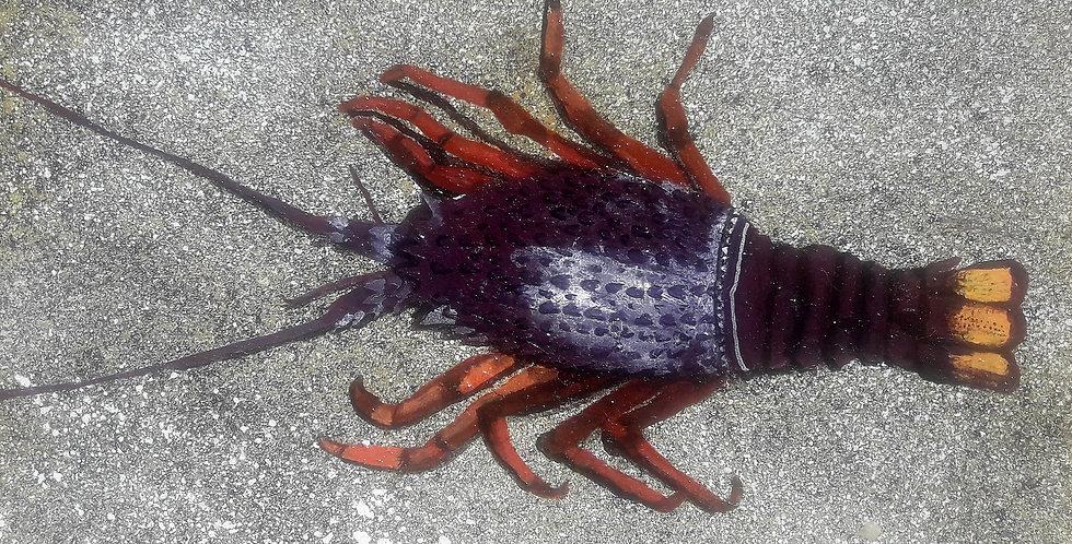Crayfish 2