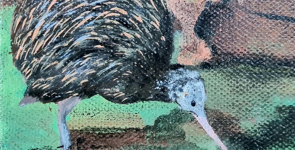 Local Little Kiwi