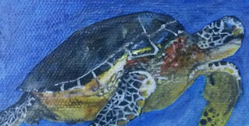Turtle for Xanthia